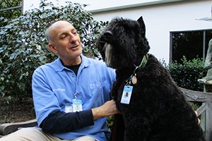 animal-assisted therapies